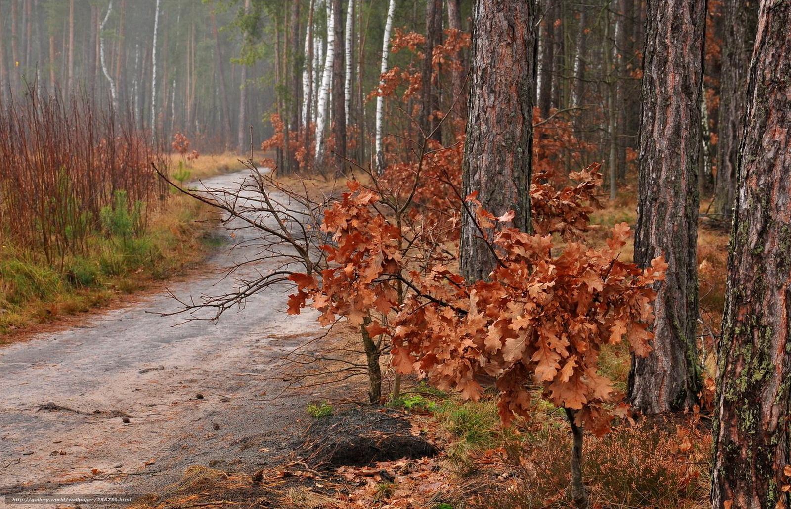 壁紙をダウンロード 森,  道路,  自然 デスクトップの解像度のための無料壁紙 1680x1080 — 絵 №258739