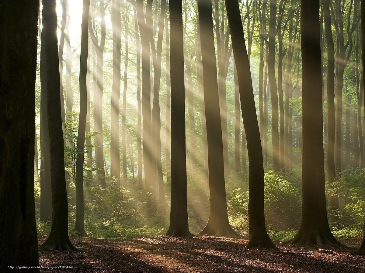 Скачать обои деревья,  лес,  свет,  солнце бесплатно для рабочего стола в разрешении 1600x1200 — картинка №2614