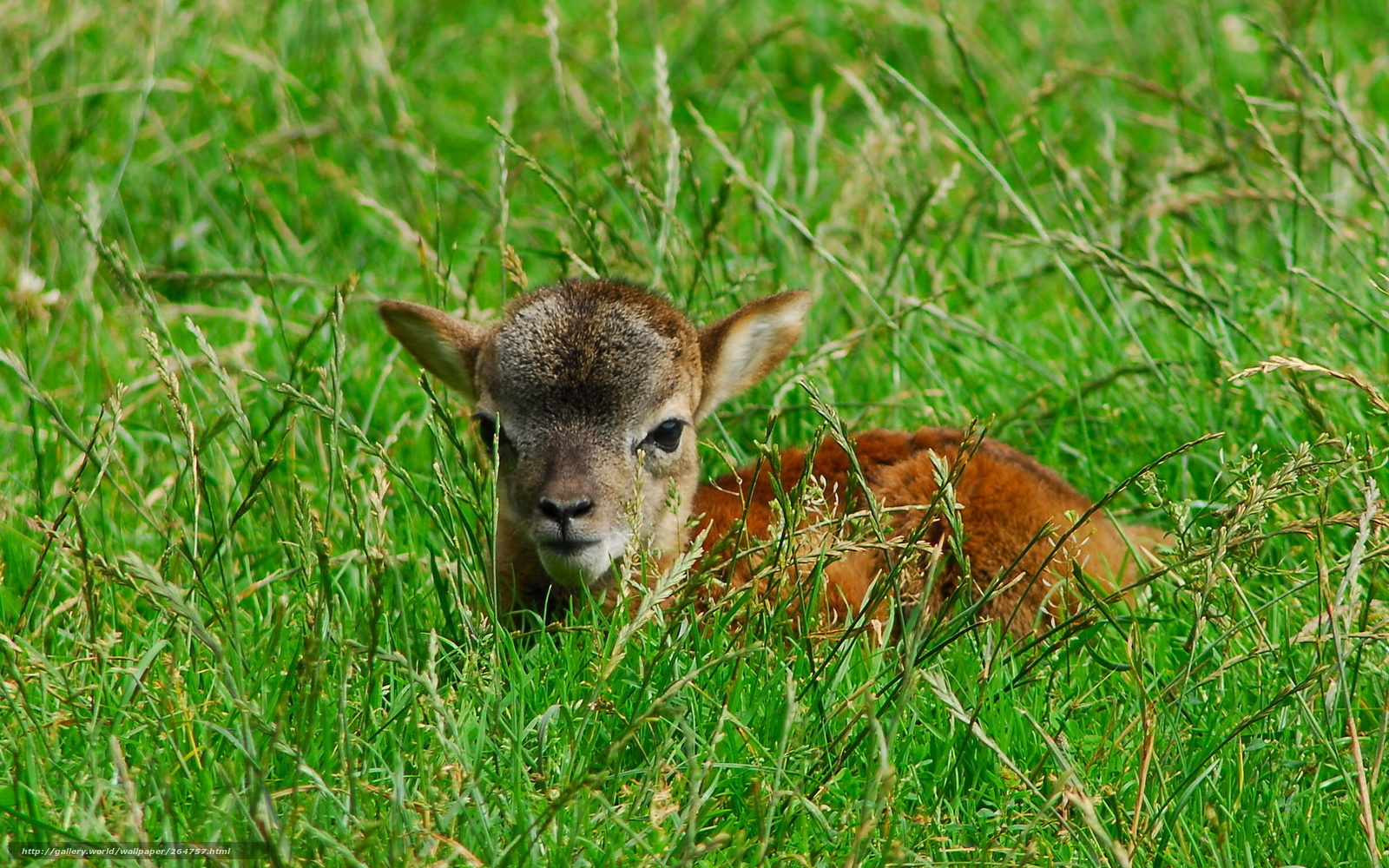 Download Wallpapers Download 2790x2547 Animals Grass: Download Wallpaper Summer, Grass, Animals Free Desktop