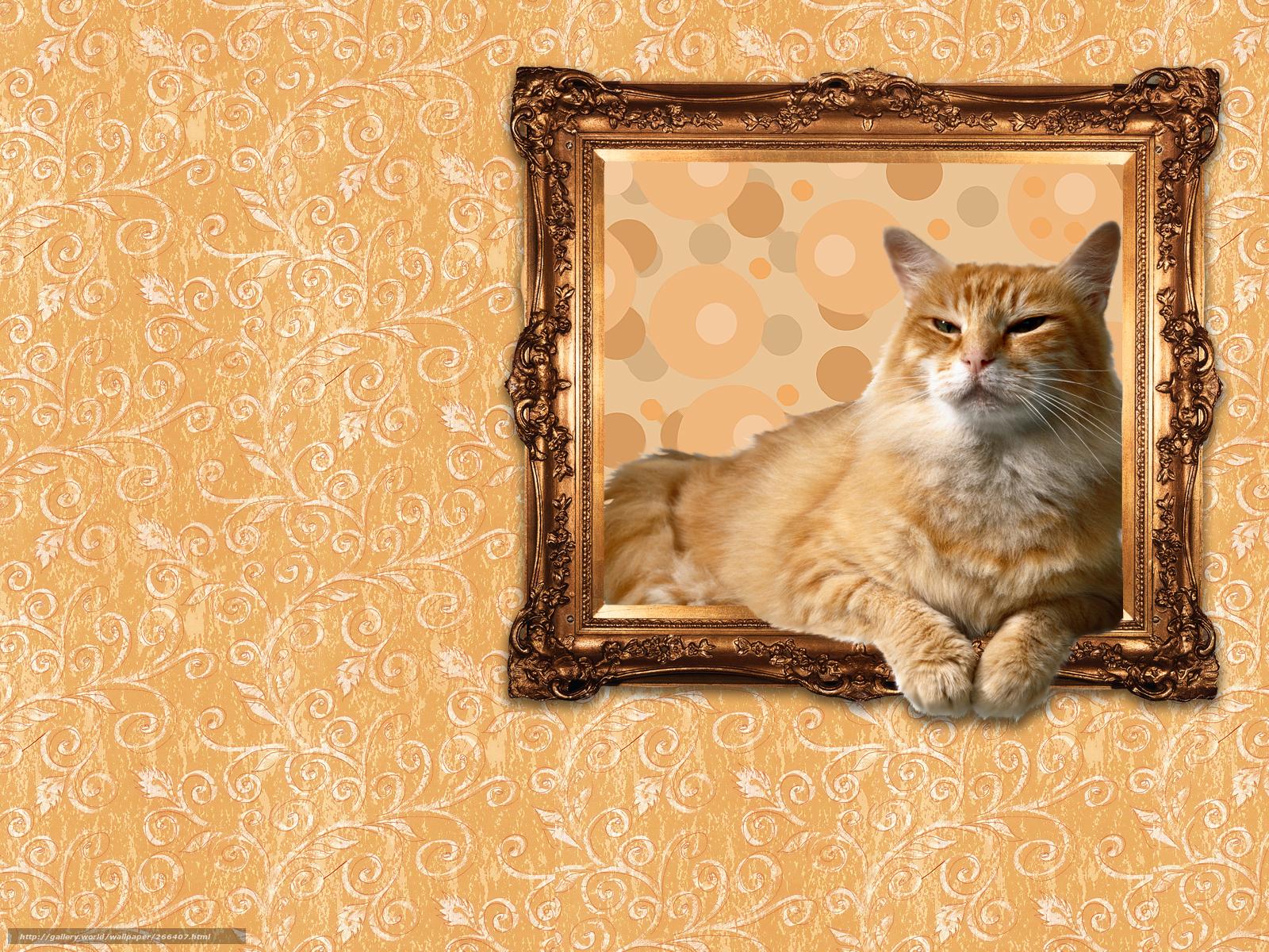 Tlcharger fond d 39 ecran chat papier peint humeur cadre for Cadre photo fond ecran