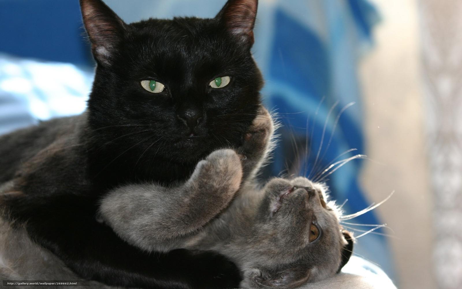 Tlcharger Fond d'ecran chat, noir, chat Fonds d'ecran gratuits pour votre rsolution du bureau ...