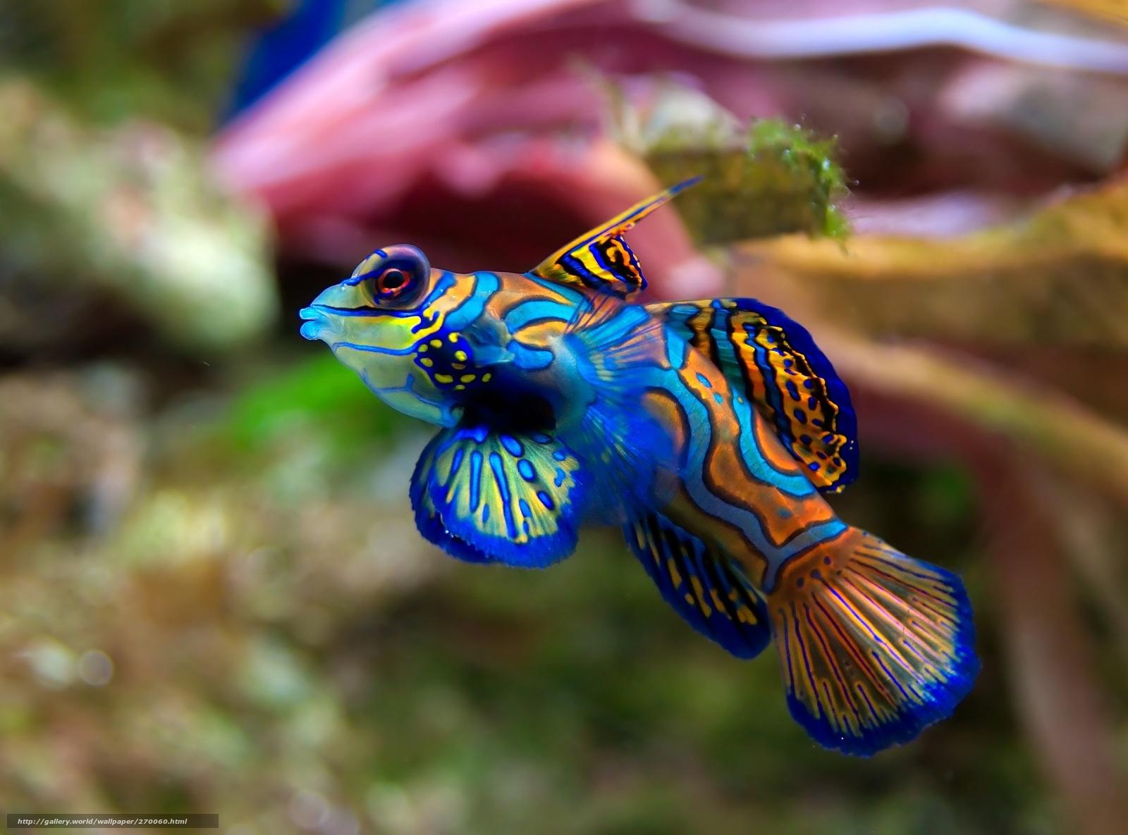 Descargar gratis pescado, especies exticas, mar, color Fondos de ...