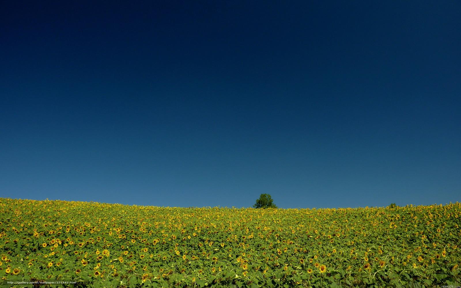 Descargar gratis campo verano naturaleza paisaje fondos de escritorio en la resolucin - Fondos de escritorio verano ...