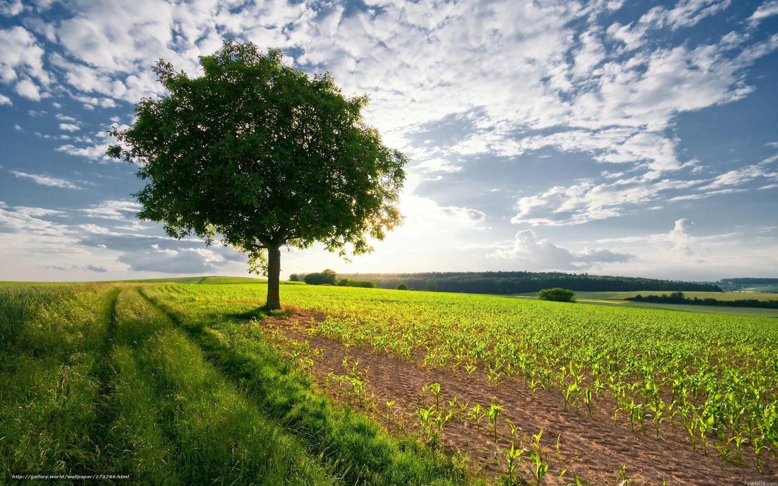 tlcharger fond decran champ arbre ciel nuages fonds decran gratuits pour votre rsolution du bureau 2560x1600 image 273789 - Arbre Ciel