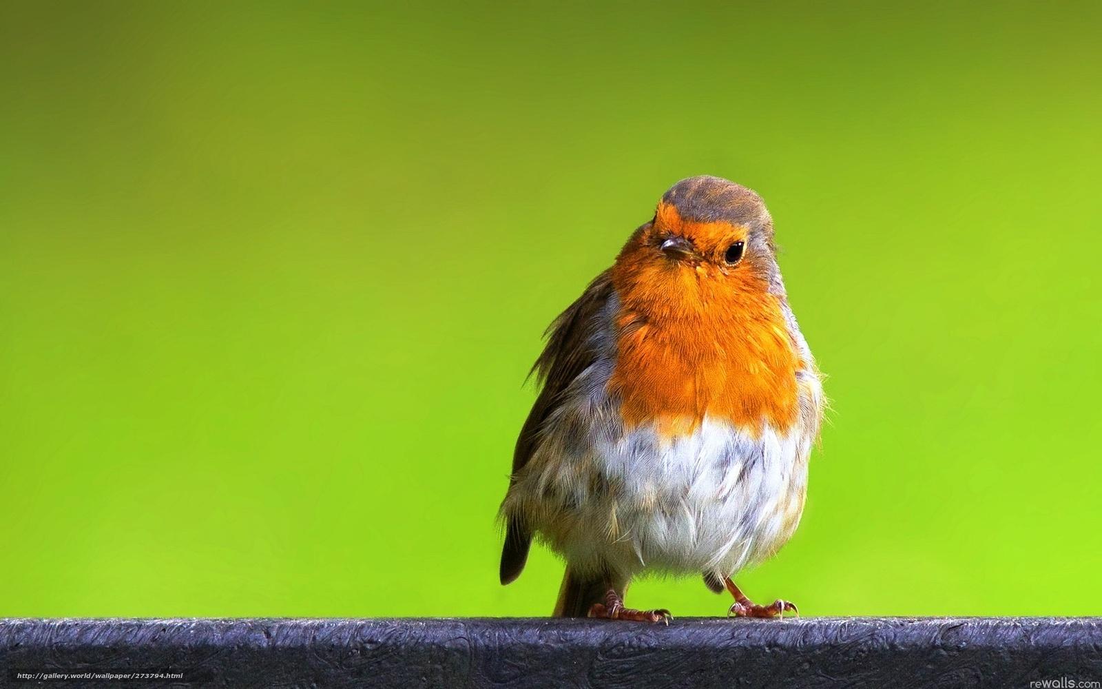 Download wallpaper bird,  nature,  color free desktop wallpaper in the resolution 1680x1050 — picture №273794