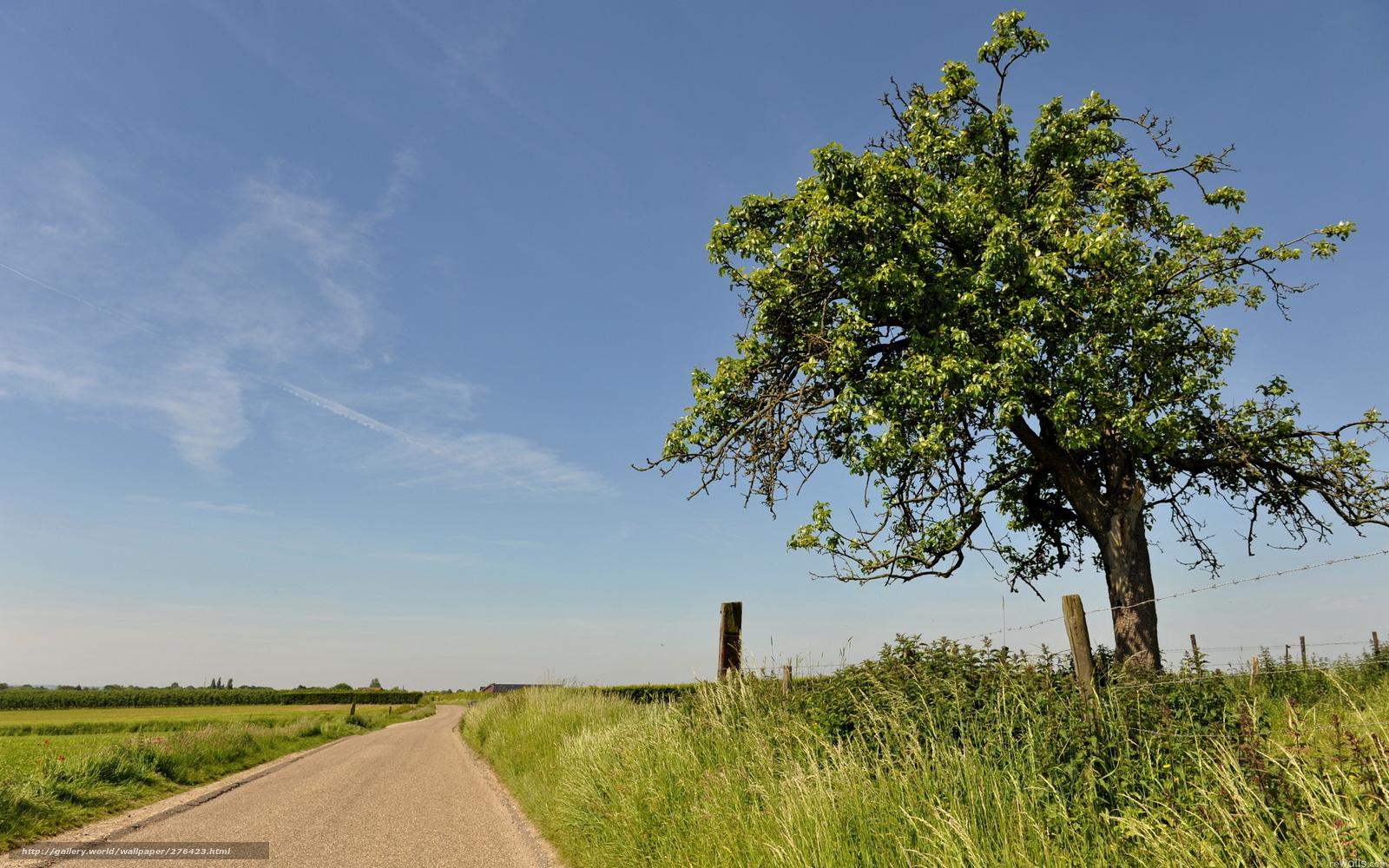 Tlcharger Fond D 39 Ecran Route Arbre Ciel Nature Fonds D