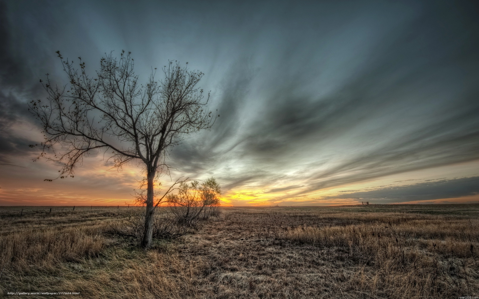 Download wallpaper field,  tree,  sky,  nature free desktop wallpaper in the resolution 2560x1600 — picture №277904