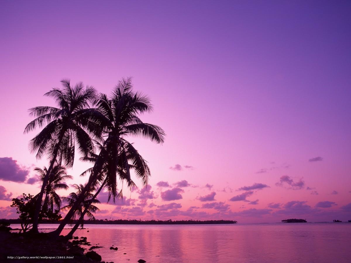 Descargar gratis Palms,  de vacaciones,  salida del sol Fondos de escritorio en la resolucin 1920x1440 — imagen №2801