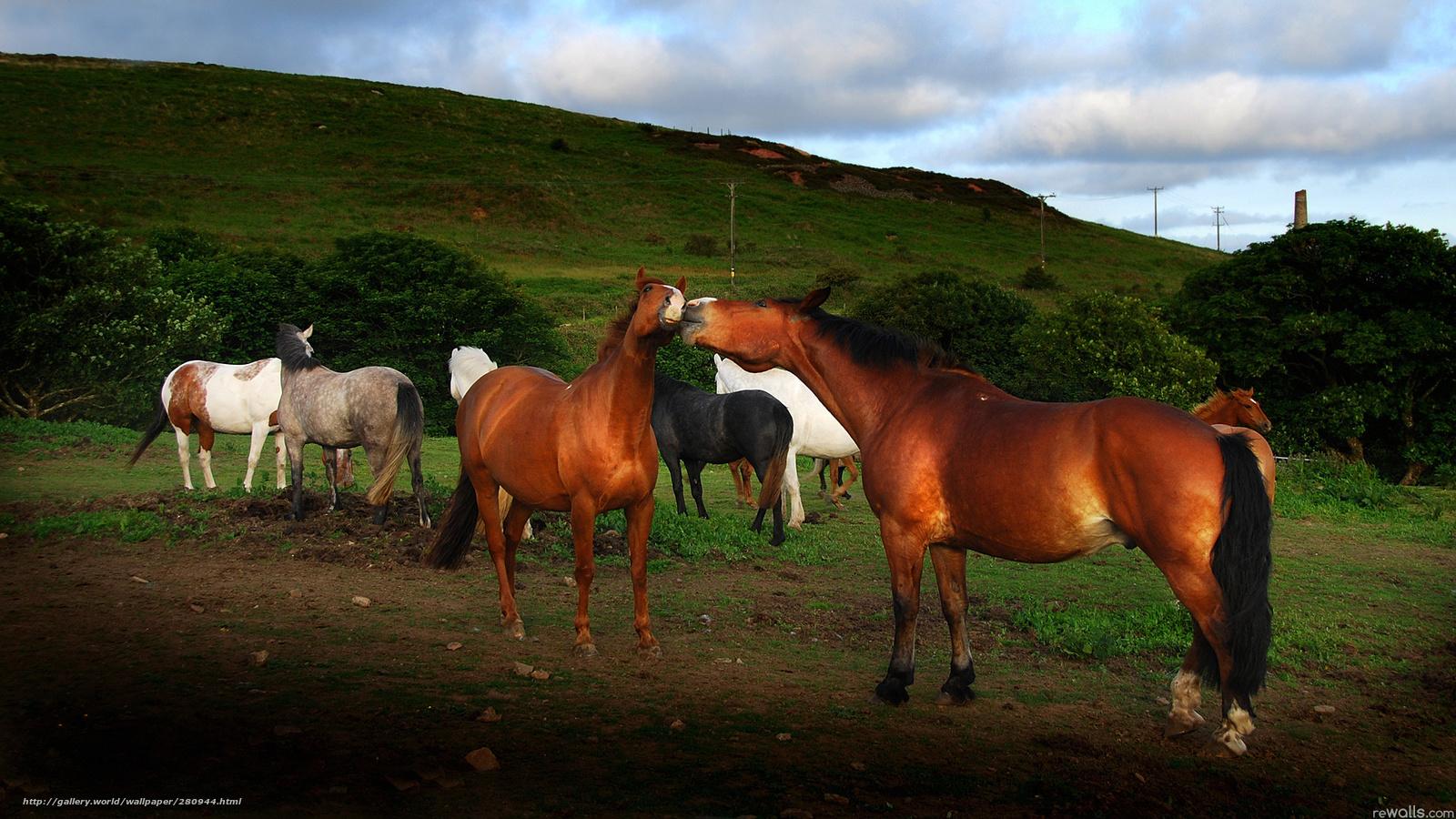 Scaricare gli sfondi cavalli estate natura sfondi gratis for Sfondi cavalli gratis