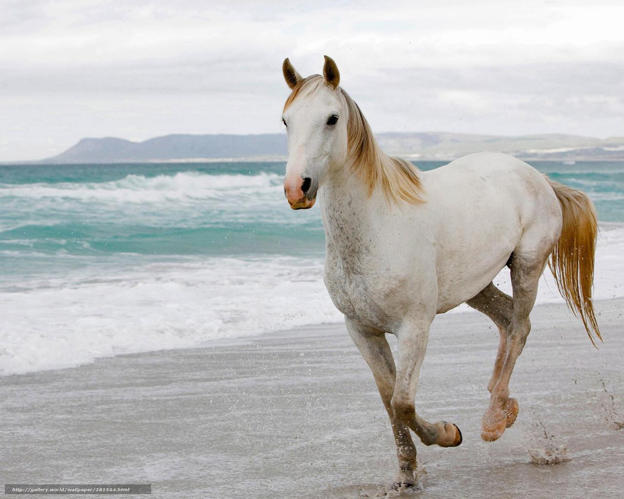 Scaricare gli sfondi mare spiaggia cavallo corre sfondi for Sfondi per desktop mare