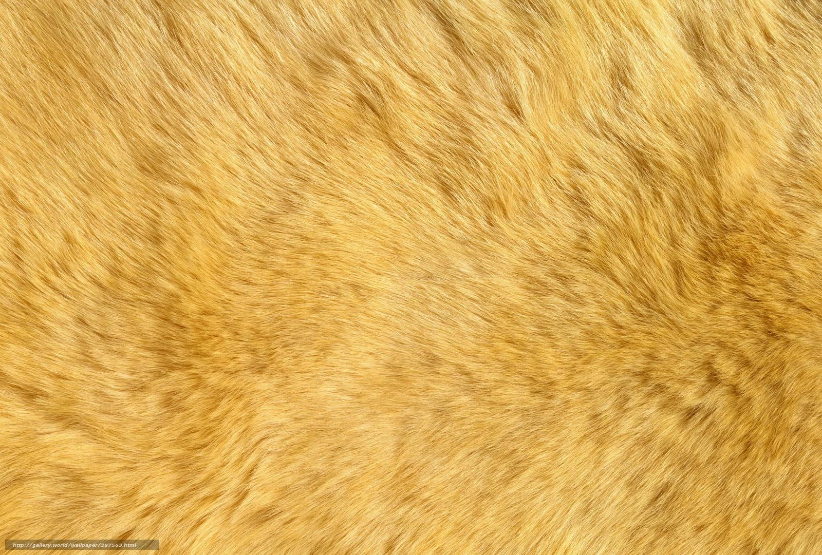 tlcharger fond d 39 ecran peau d 39 ours polaire fourrure peau fonds d 39 ecran gratuits pour votre. Black Bedroom Furniture Sets. Home Design Ideas