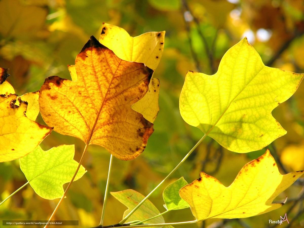 Скачать обои осень,  желтый,  желтые листья,  передний план бесплатно для рабочего стола в разрешении 2816x2112 — картинка №290