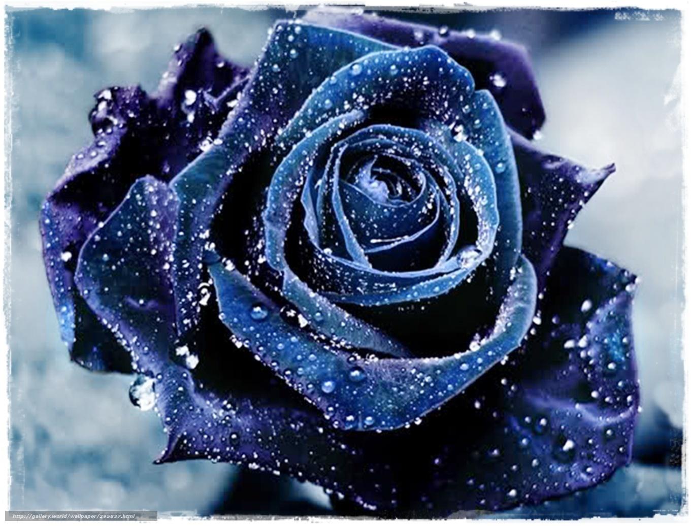 Image Fond Ecran Fleur Rose Idee D Image De Fleur