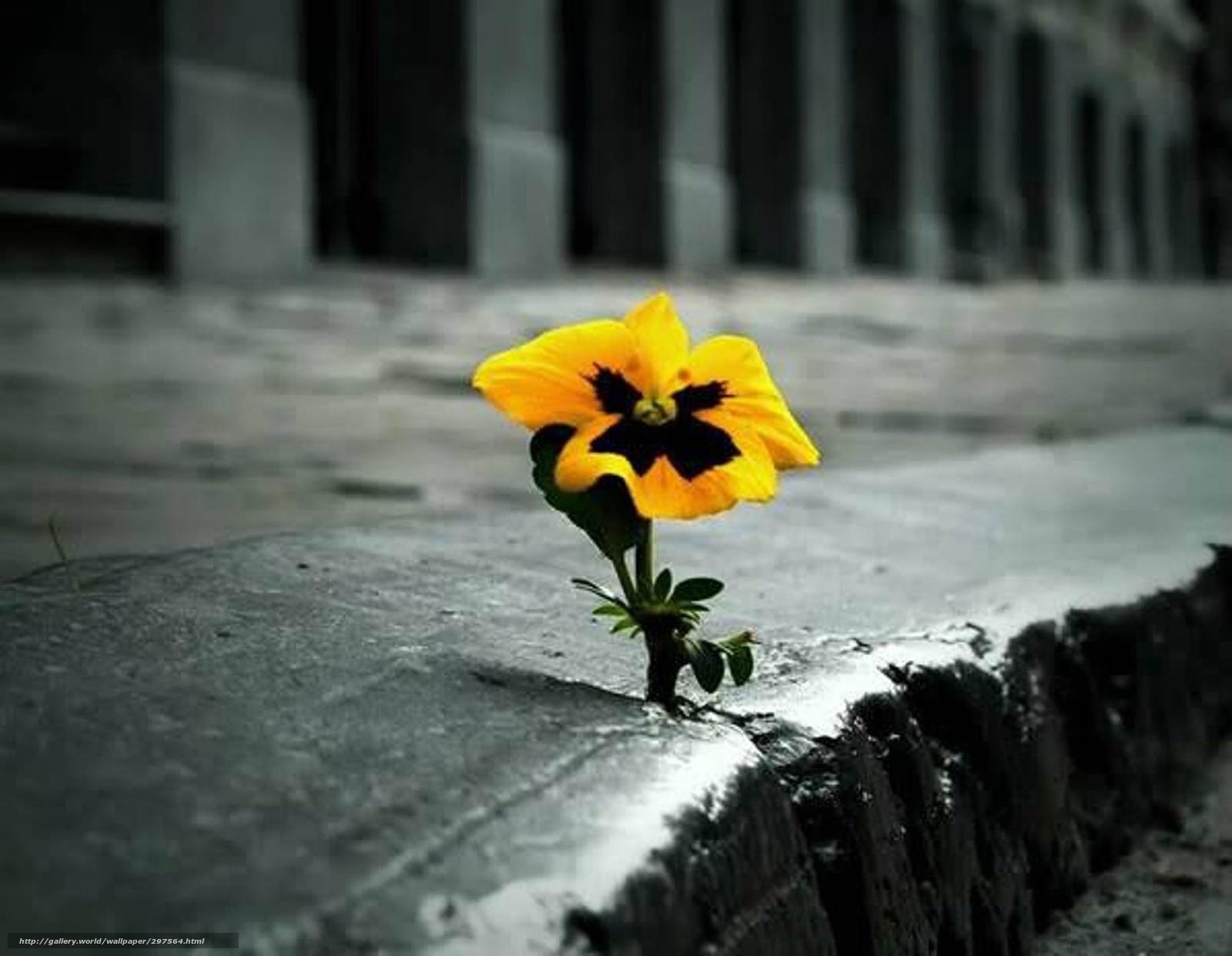 A tarde segue, modorrenta, como sempre.  A memória vagueia por saudades que reabrem cicatrizes no sofrido coração.  Estou repleto, de saudade, silêncio  e solidão.