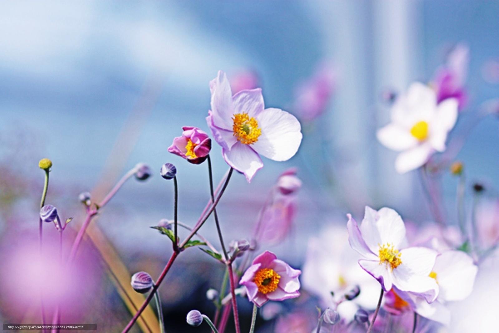 Scaricare gli sfondi fiori sfondo stato d 39 animo sfondi for Sfondi desktop fiori