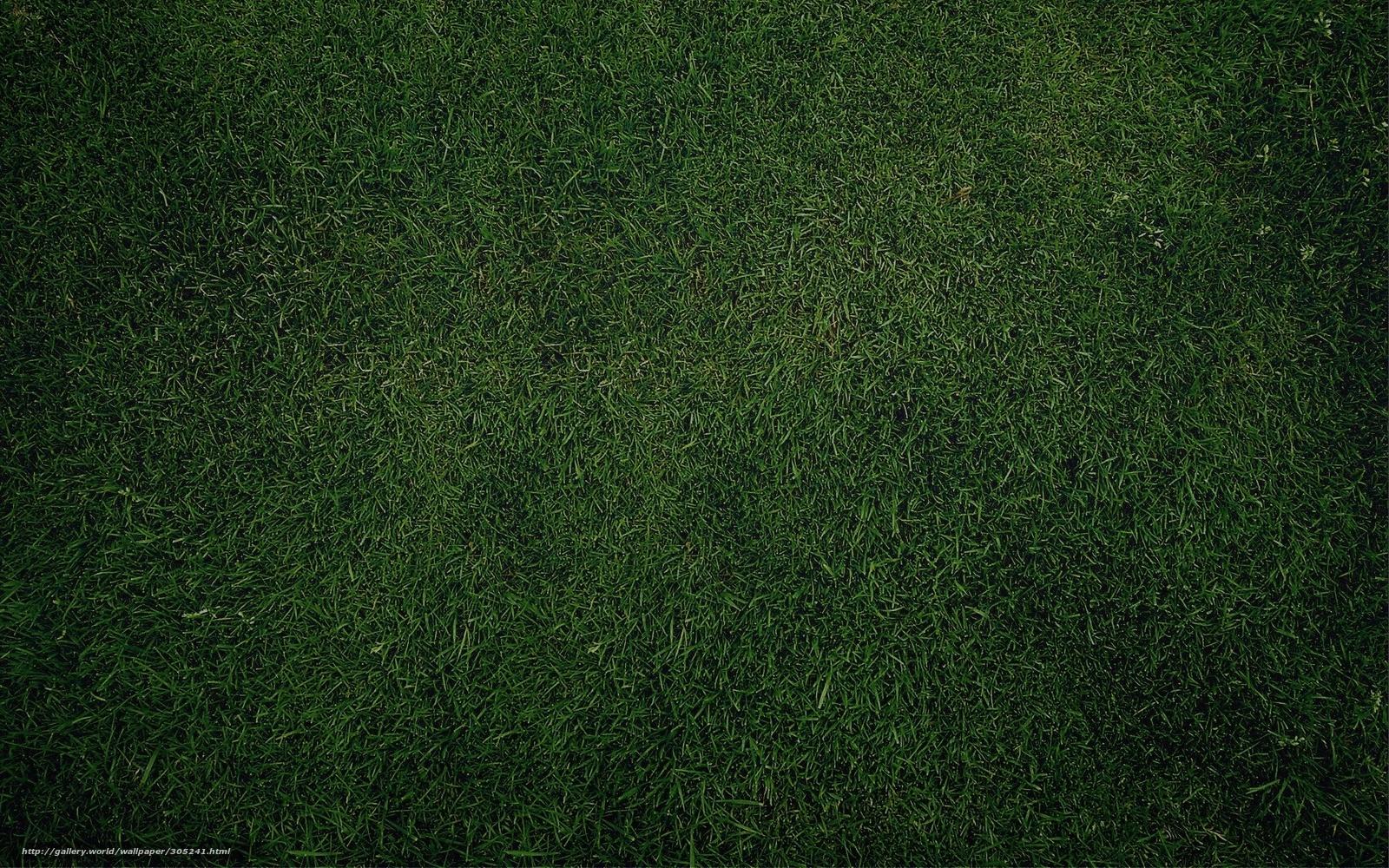 Download Hintergrund Gras Textur Pflanzen Freie Desktop