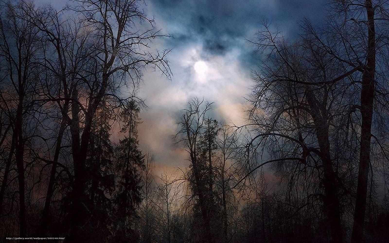 Фото лес туман