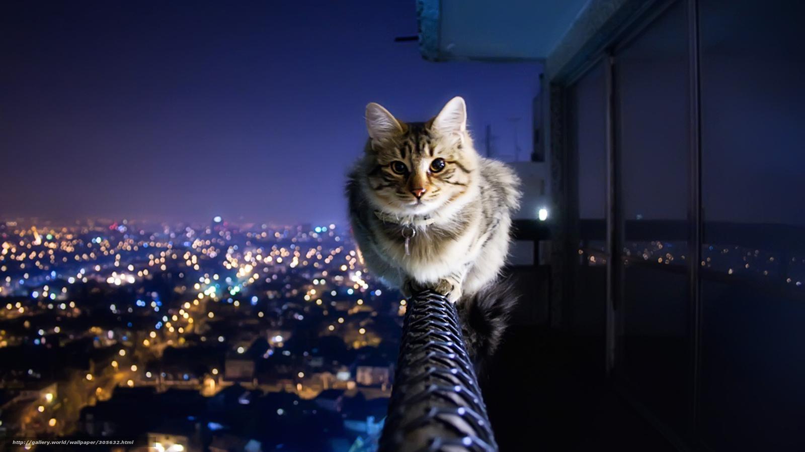 Pobra Tapety Zwierzta Kot Koty Ciemny Darmowe Tapety Na Pulpit