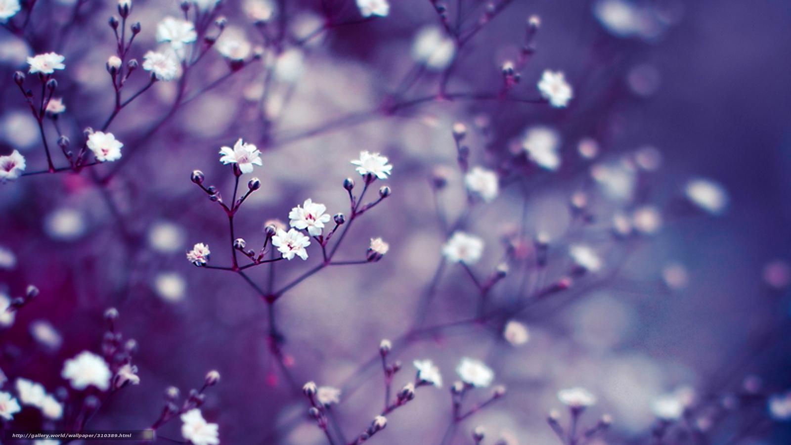 Pobra Tapety Kwiaty Macro Liliowy Darmowe Tapety Na