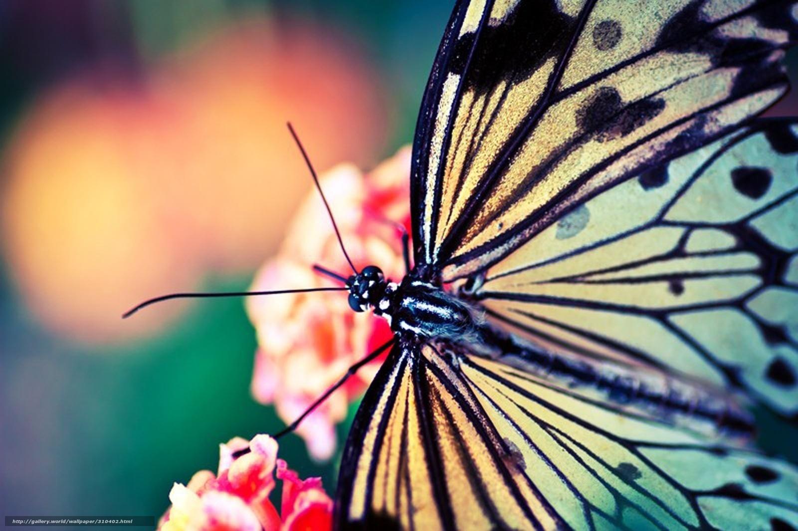 scaricare gli sfondi farfalla,  Macro,  estate Sfondi gratis per la risoluzione del desktop 1600x1066 — immagine №310402