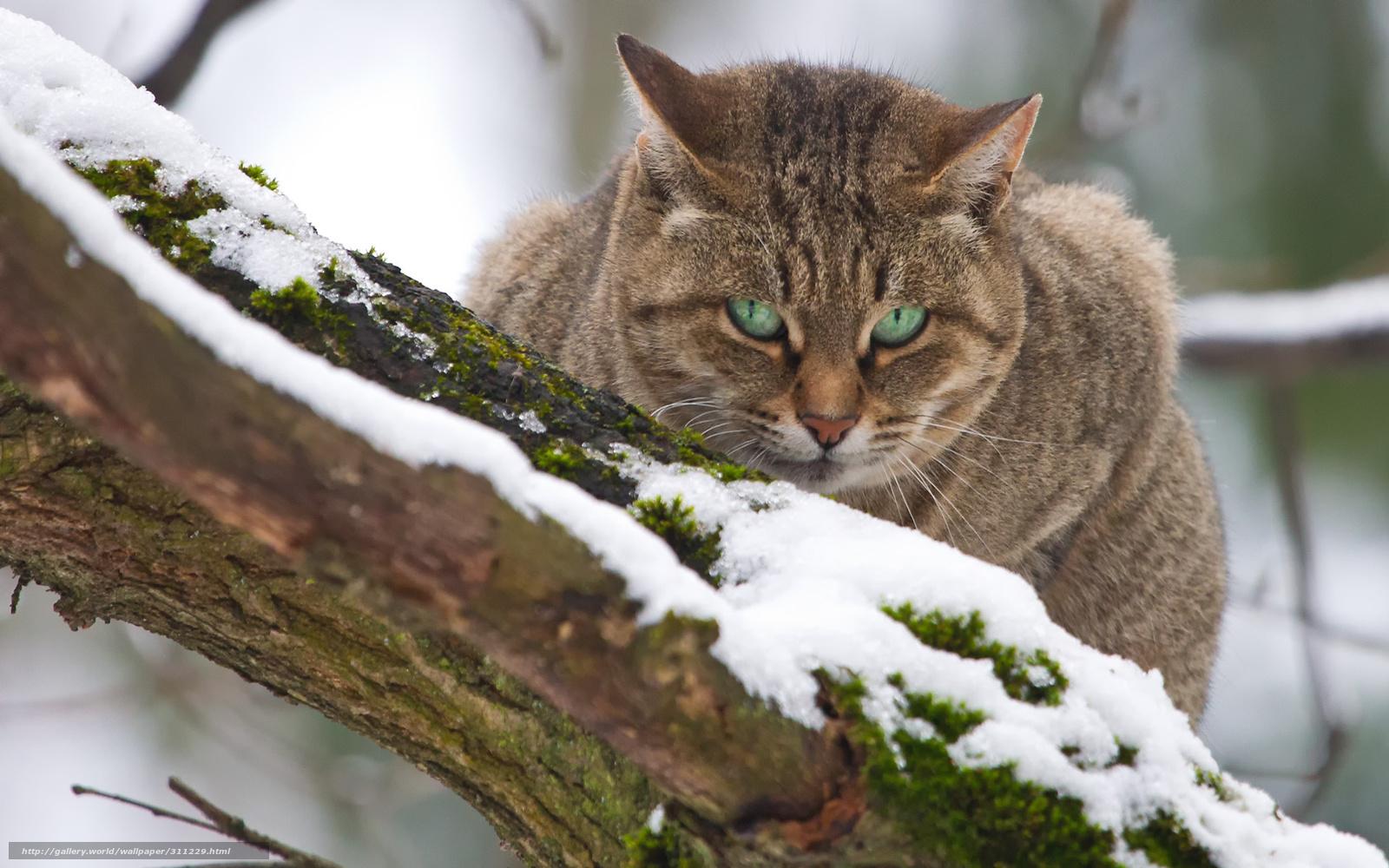 Tlcharger fond d 39 ecran chat arbre hiver fonds d 39 ecran for Fond ecran hiver animaux