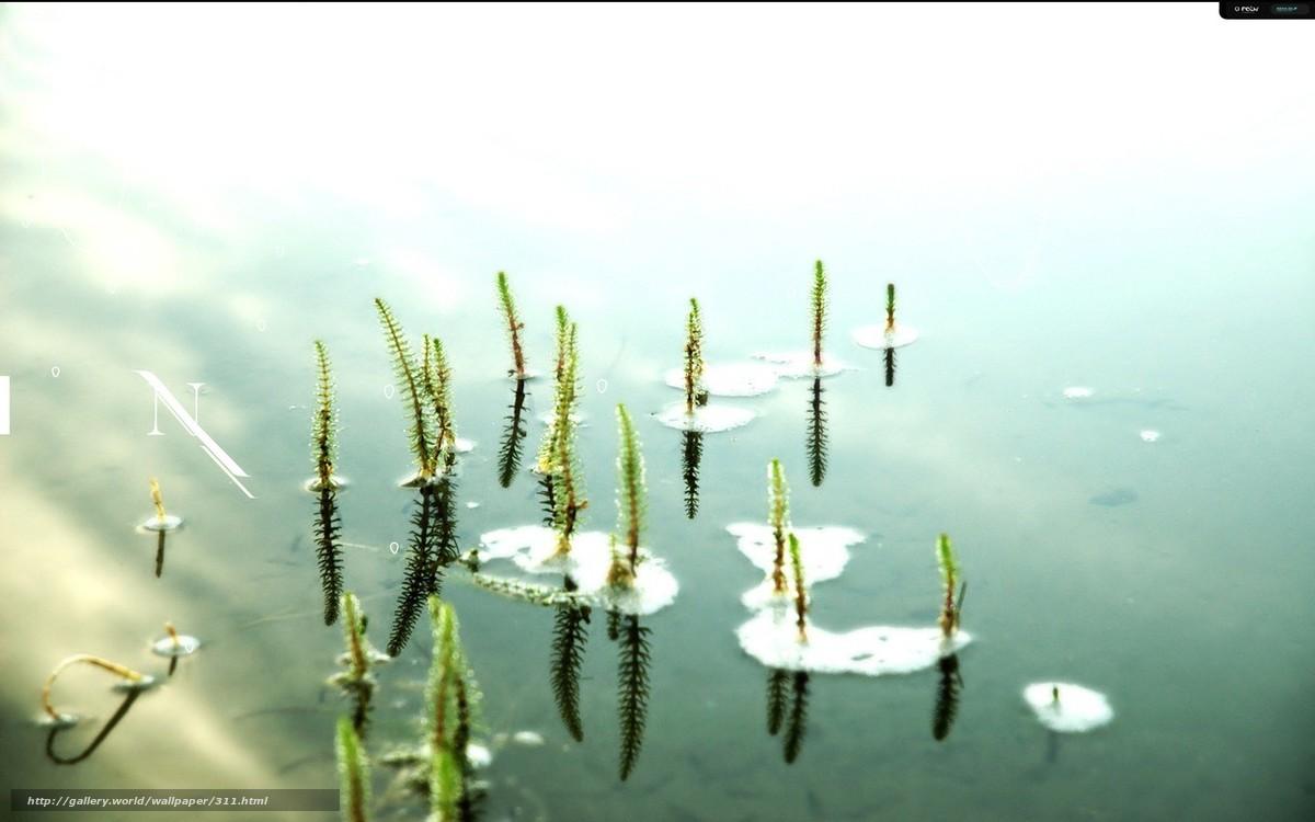 scaricare gli sfondi stato d'animo,  solitudine,  acqua,  stagno Sfondi gratis per la risoluzione del desktop 1280x800 — immagine №311