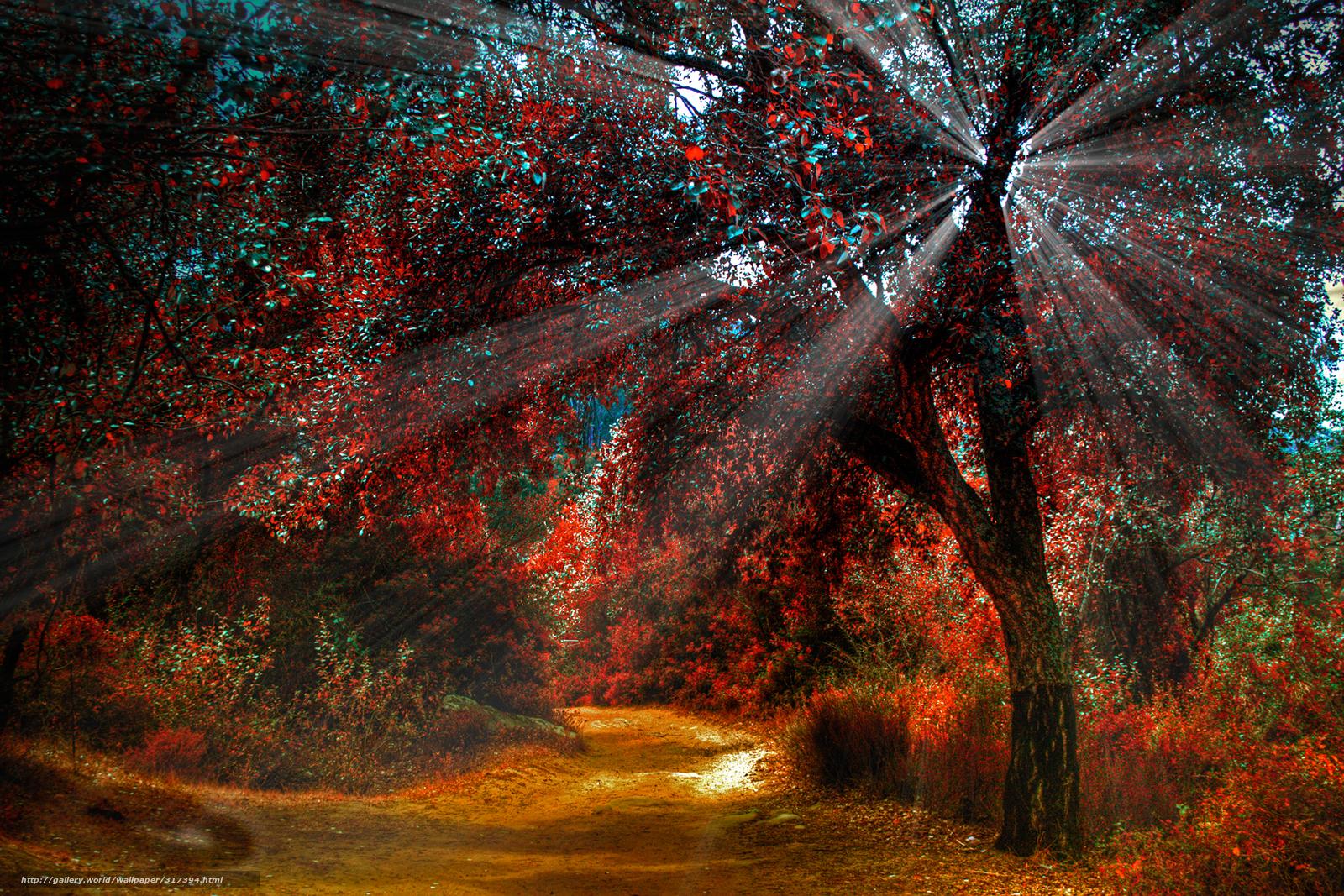 Картинки осень лес грибы