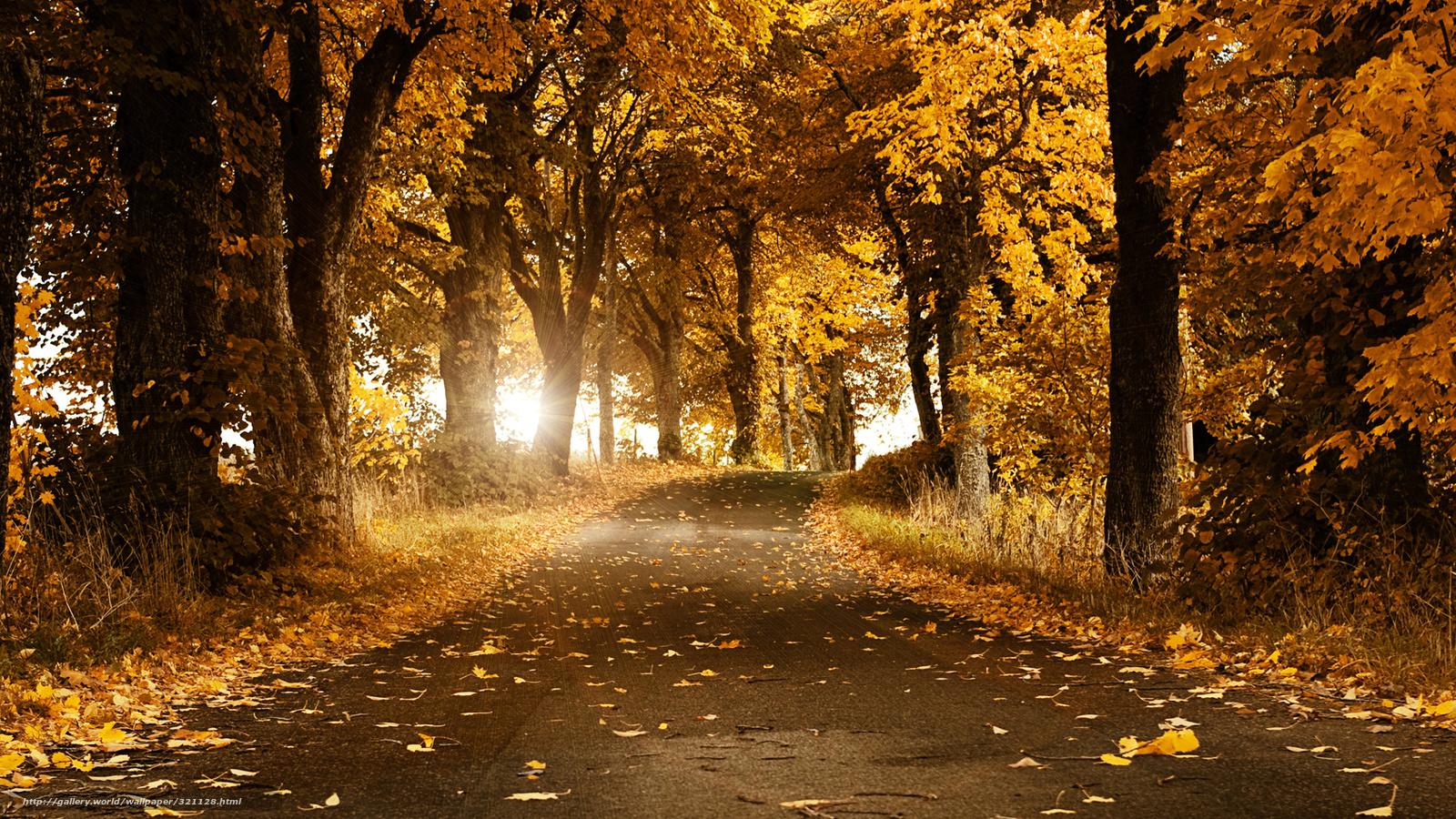 壁纸 风景 森林 桌面 1600_900