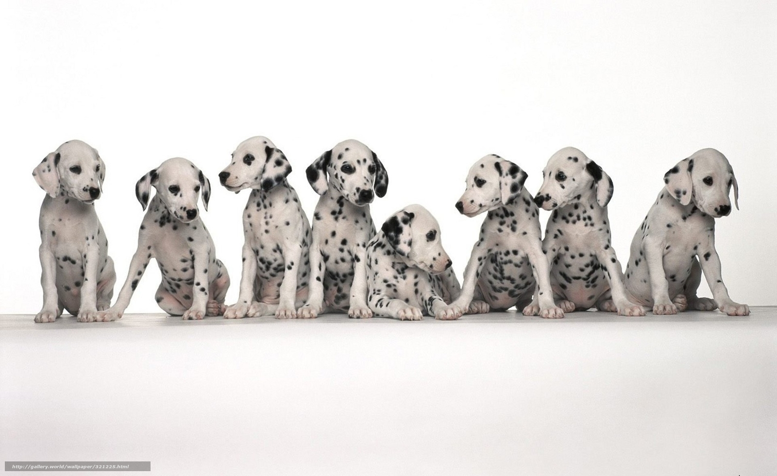 Download wallpaper Dog,  spot,  Dalmatians,  sit free desktop wallpaper in the resolution 1920x1176 — picture №321225