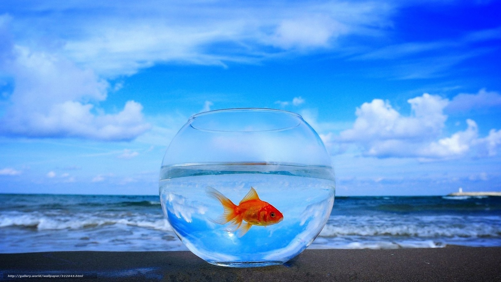 обои на рабочий стол аквариум с движущимися рыбками
