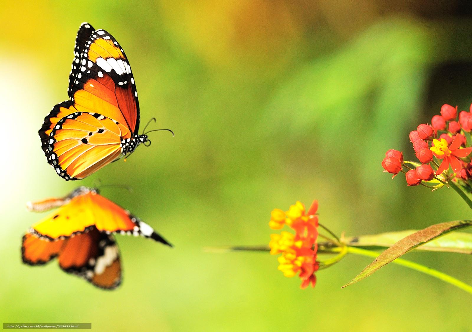 Scaricare gli sfondi farfalle fiori luminoso colore for Sfondi farfalle gratis