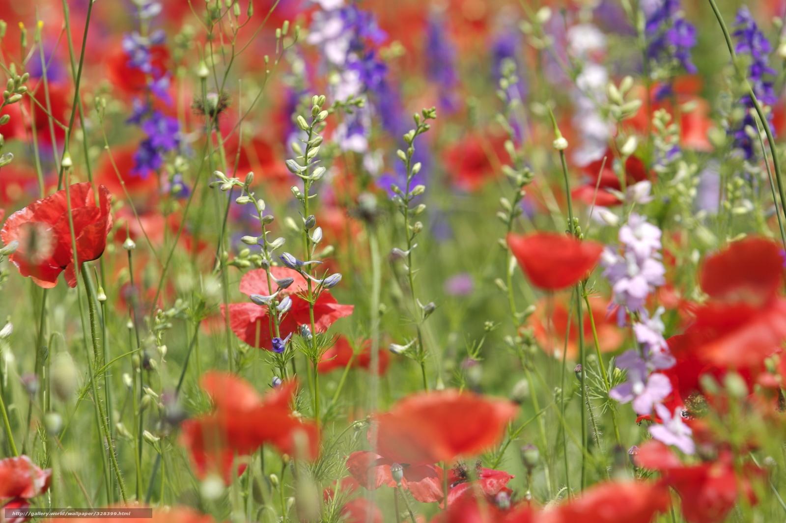 Tlcharger Fond d'ecran Fleurs, diffrent, champ, Coquelicots Fonds d'ecran gratuits pour votre ...