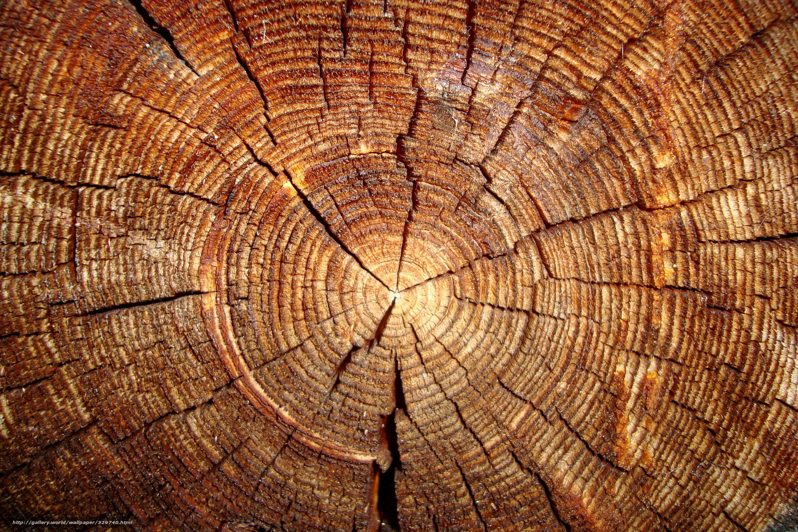 Log Wallpaper With The Texture Of Logs ~ Download wallpaper tree log section free desktop