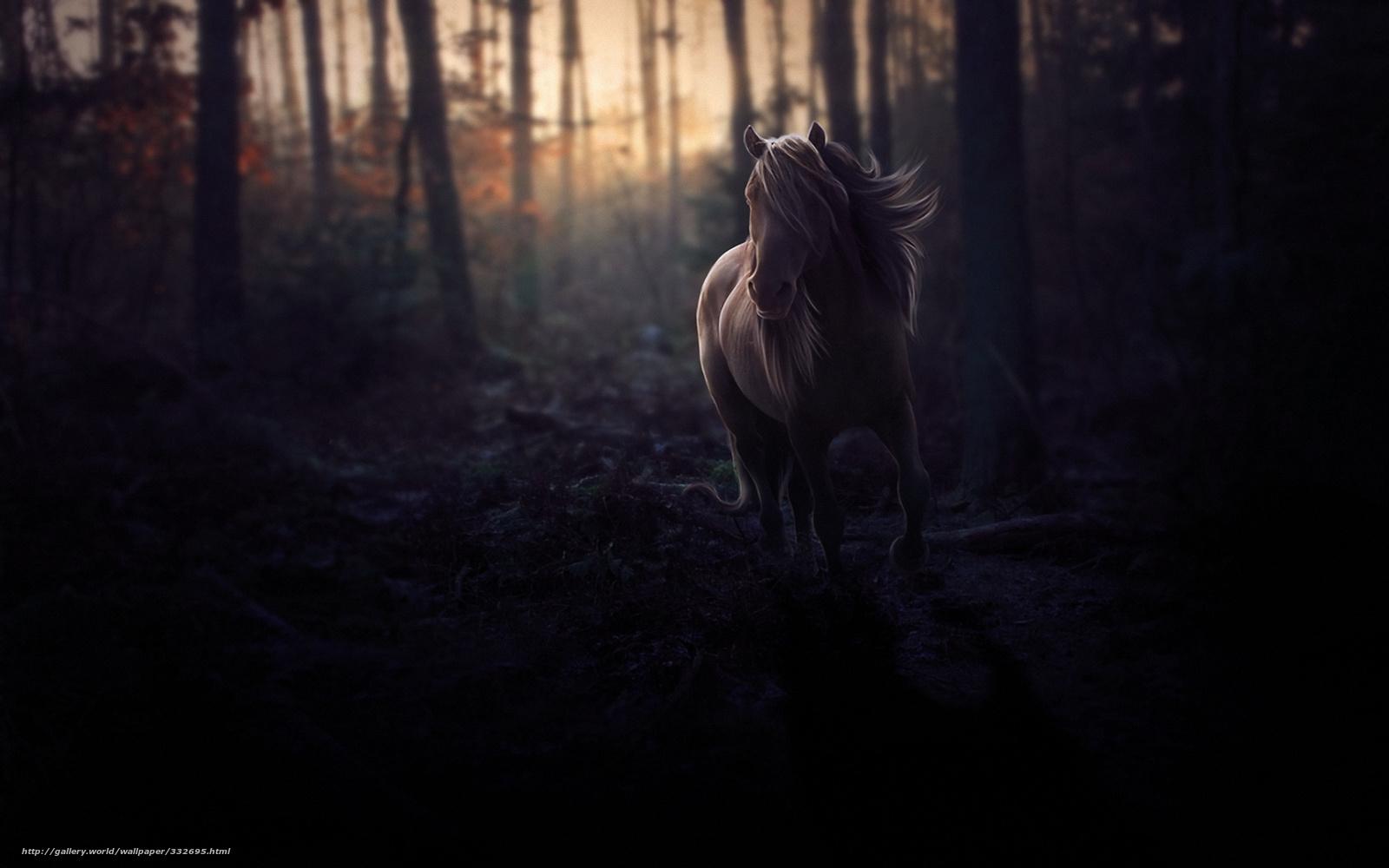 download wallpaper horse, forest, evening free desktop wallpaper