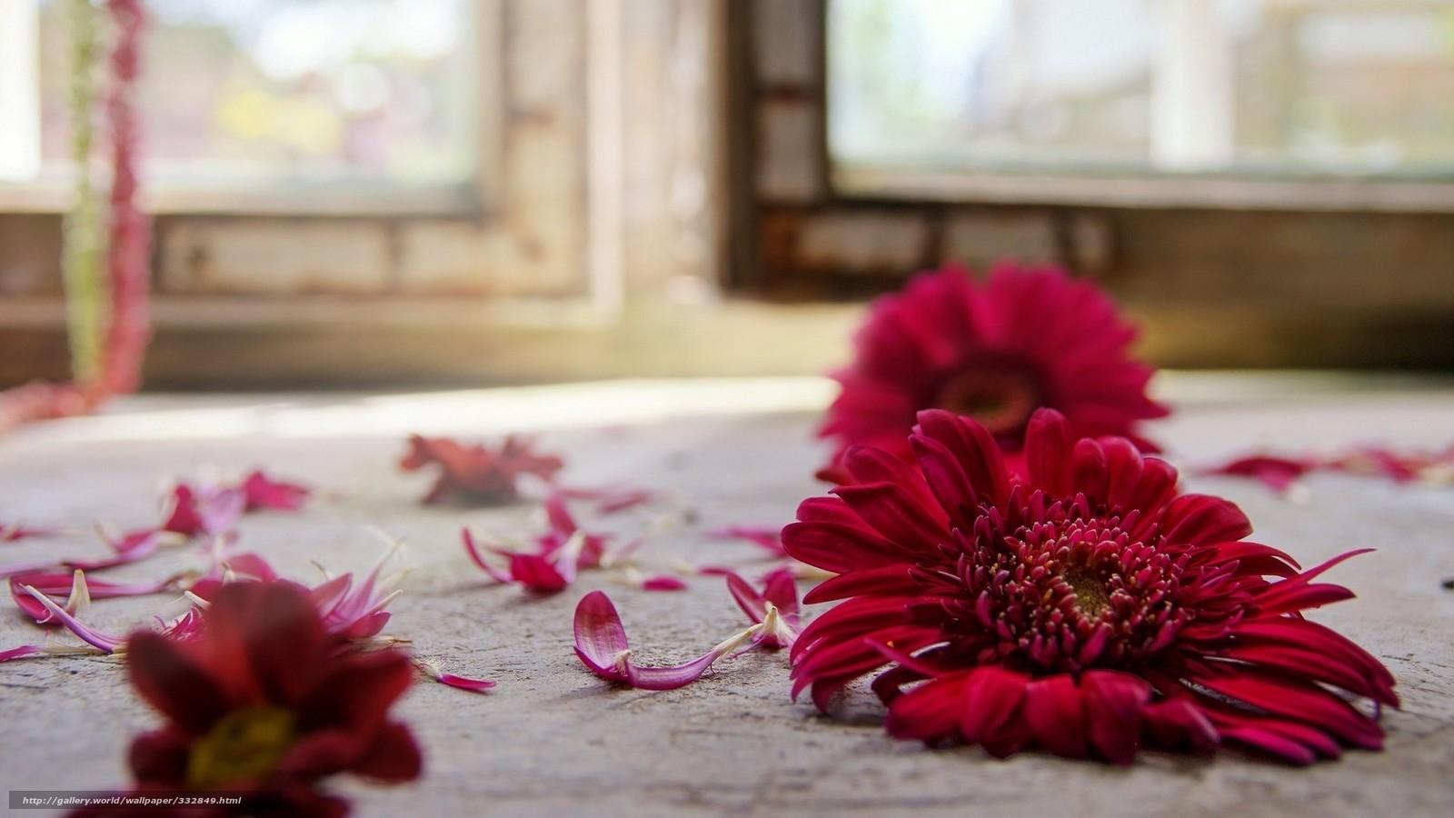 Download wallpaper red,  flower,  gerbera,  on the floor free desktop wallpaper in the resolution 1920x1080 — picture №332849