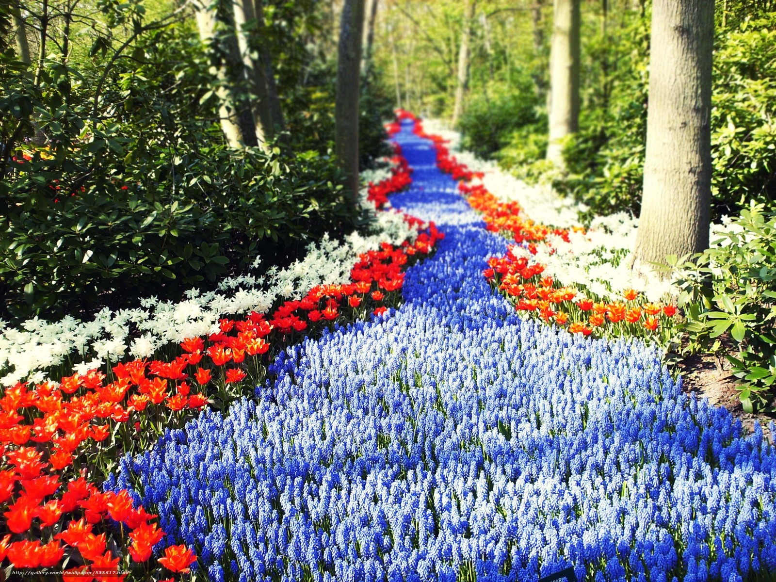 Download wallpaper Holland,  Flowers,  road,  footpath free desktop wallpaper in the resolution 2848x2136 — picture №333617