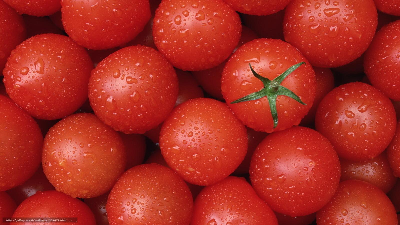 Tlcharger Fond d'ecran nourriture,  tomates,  tomates,  rouge Fonds d'ecran gratuits pour votre rsolution du bureau 1920x1080 — image №334071
