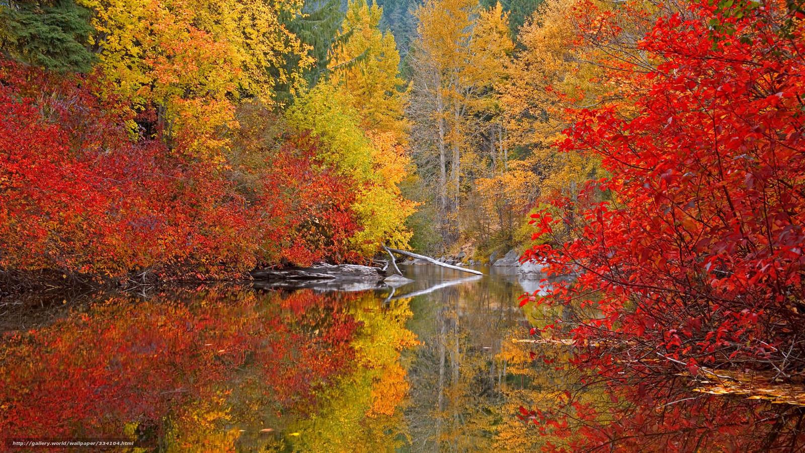 Download Hintergrund Herbst, Farben, Wald Freie desktop Tapeten in ...