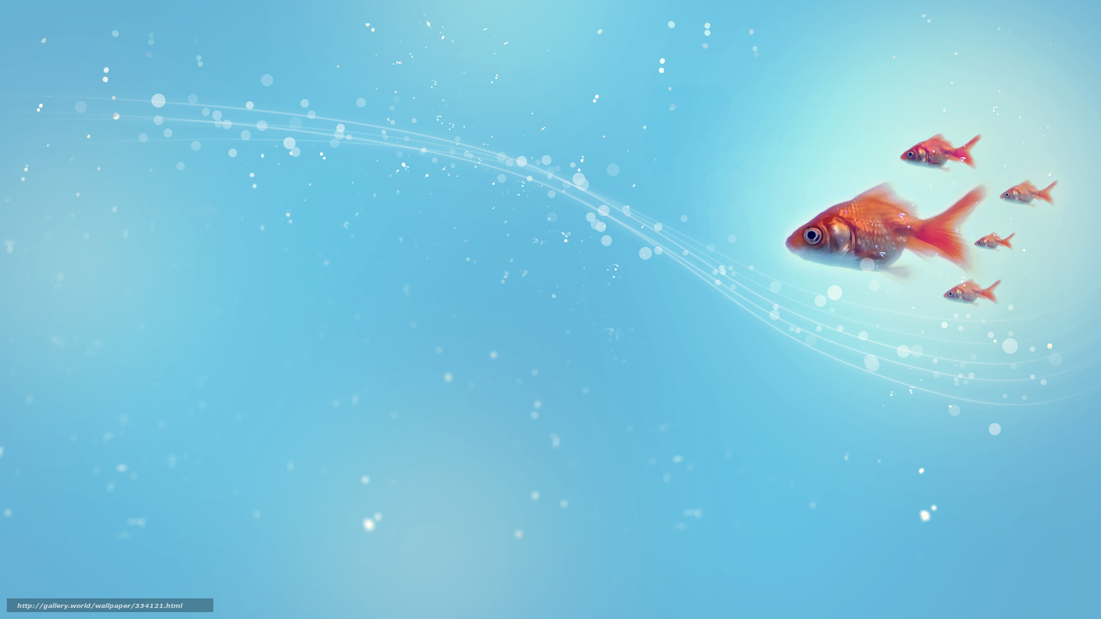 Download wallpaper style,  Fish,  abstraction,  lines free desktop wallpaper in the resolution 2560x1440 — picture №334121