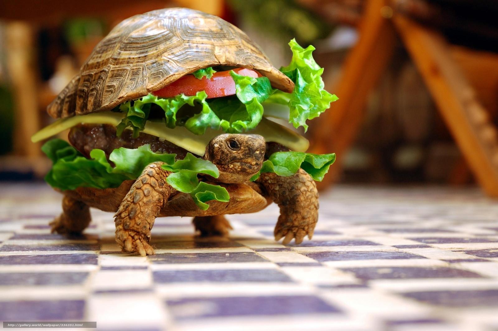 Download wallpaper mood,  turtle,  food free desktop wallpaper in the resolution 2560x1703 — picture №336351