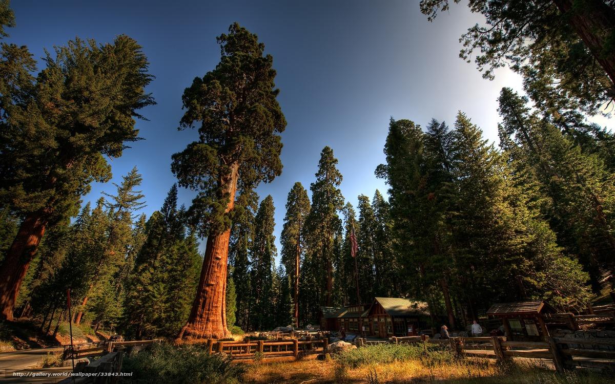 Скачать обои лес,  деревья,  дом,  небо бесплатно для рабочего стола в разрешении 2560x1600 — картинка №33843