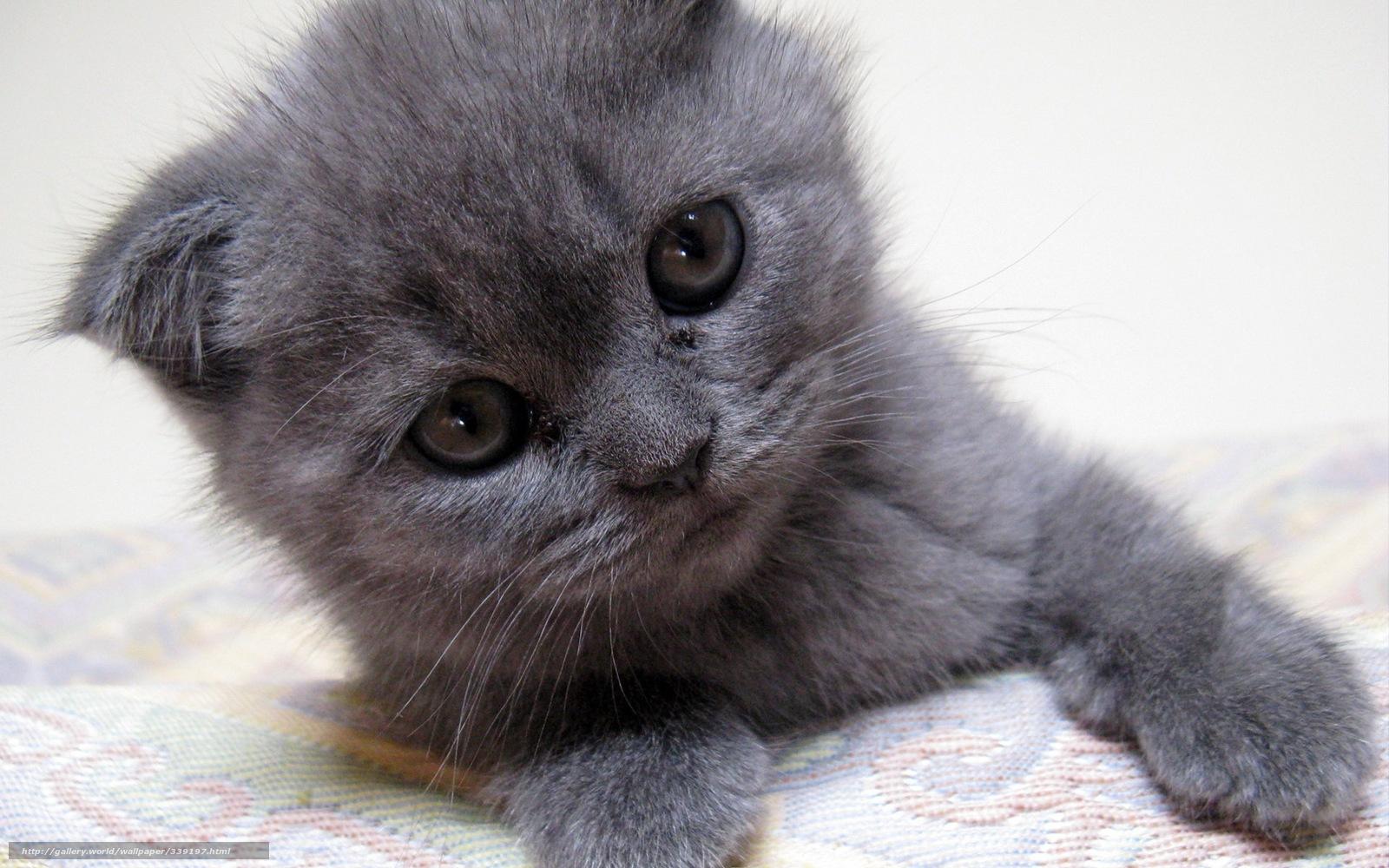 grey kitten wallpaper 294 - photo #19