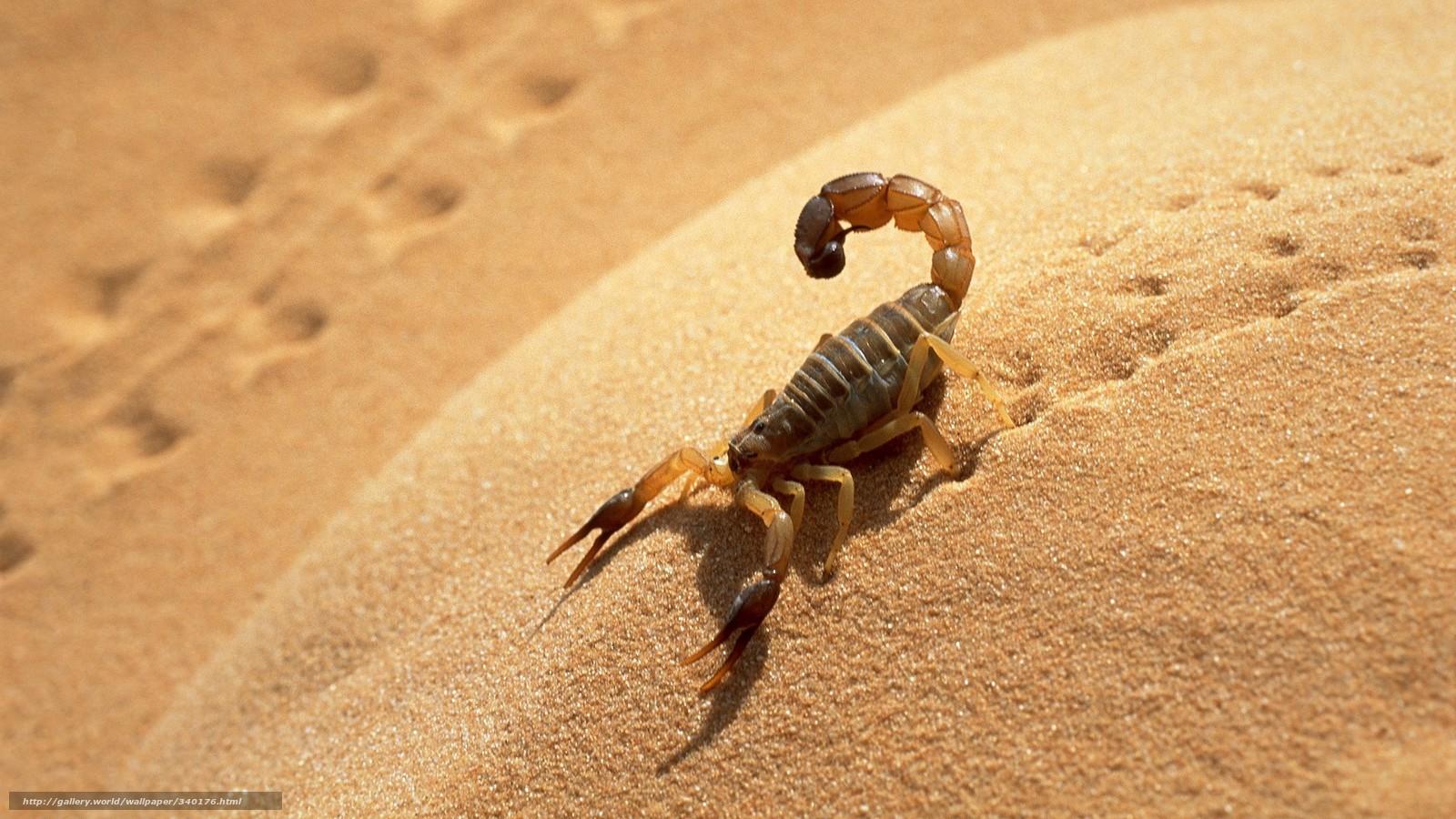 Tlcharger Fond d'ecran scorpion,  sable,  ombre,  traces Fonds d'ecran gratuits pour votre rsolution du bureau 1920x1080 — image №340176