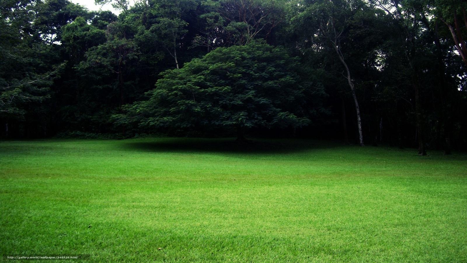Tlcharger fond d 39 ecran parc vert pelouse fonds d 39 ecran gratuits pour votre rsolution du bureau - Temps pousse gazon ...