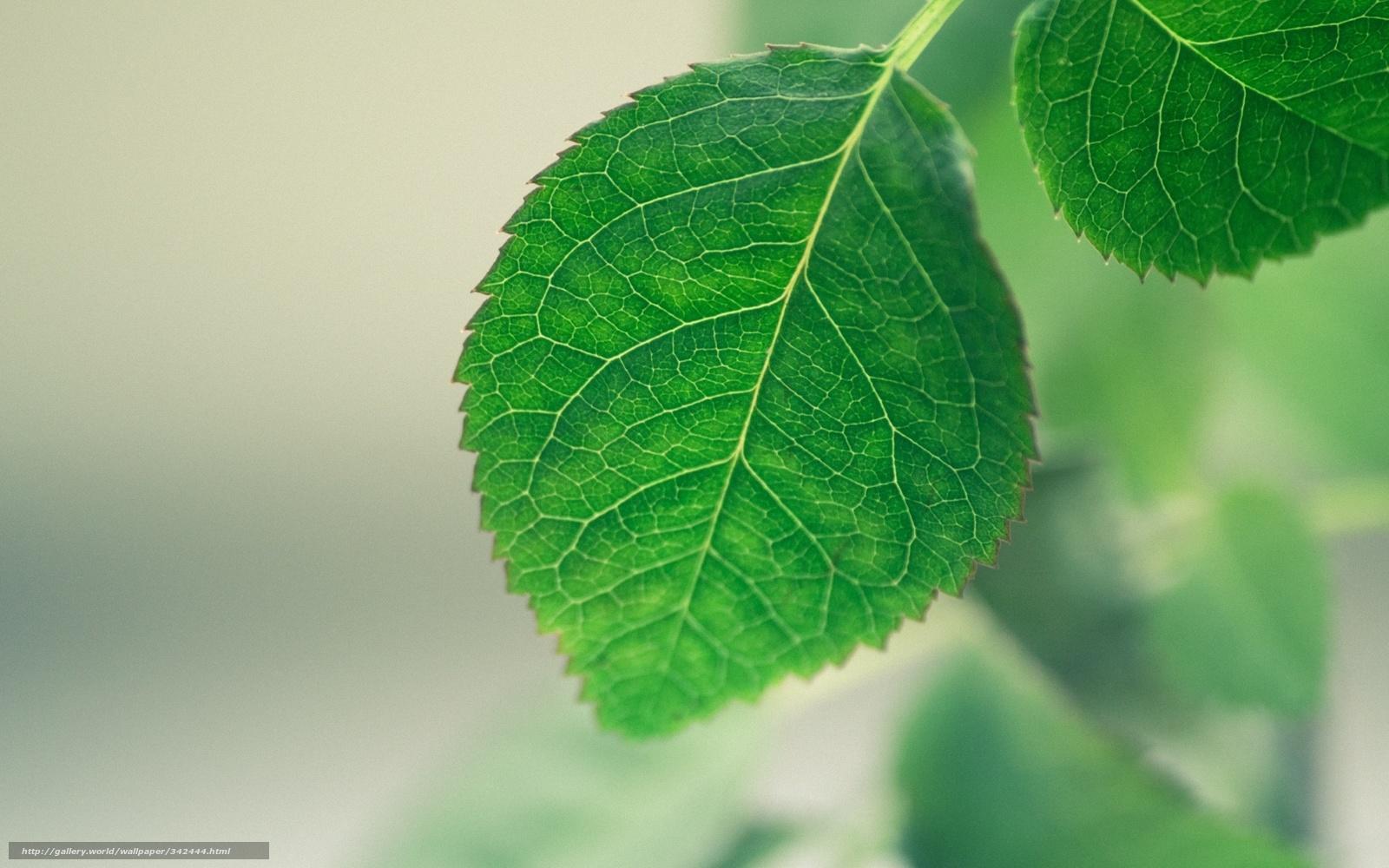 Scaricare Gli Sfondi Verde Fogliame Uno Sfondo Sfumato Sfondi