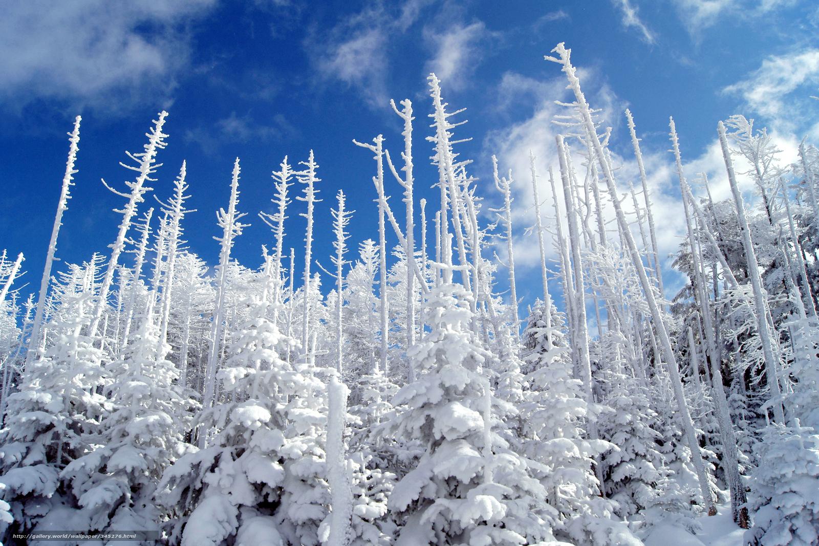 Scaricare gli sfondi natura inverno neve cielo sfondi for Immagini inverno sfondi