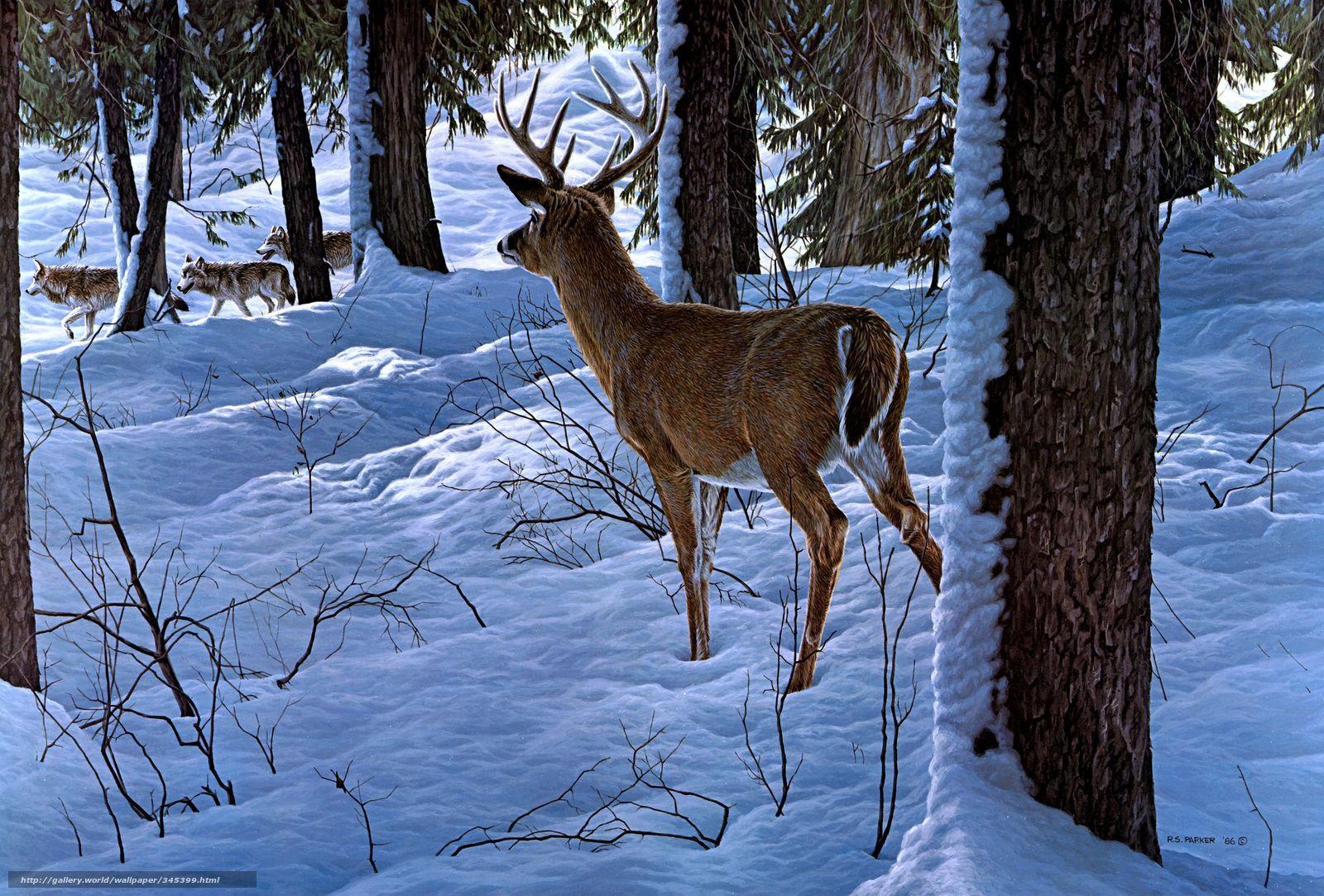 Descargar Gratis Ron S Parker Invierno Bosque Nieve Fondos De Escritorio En La Resolucin 2528x1711 Imagen 345399