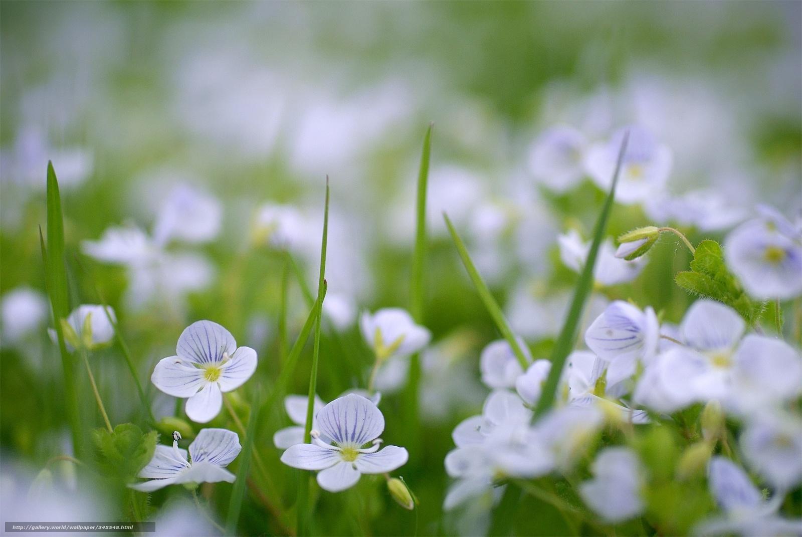 Скачать обои природа,  весна,  цветы бесплатно для рабочего стола в разрешении 1936x1296 — картинка №345548