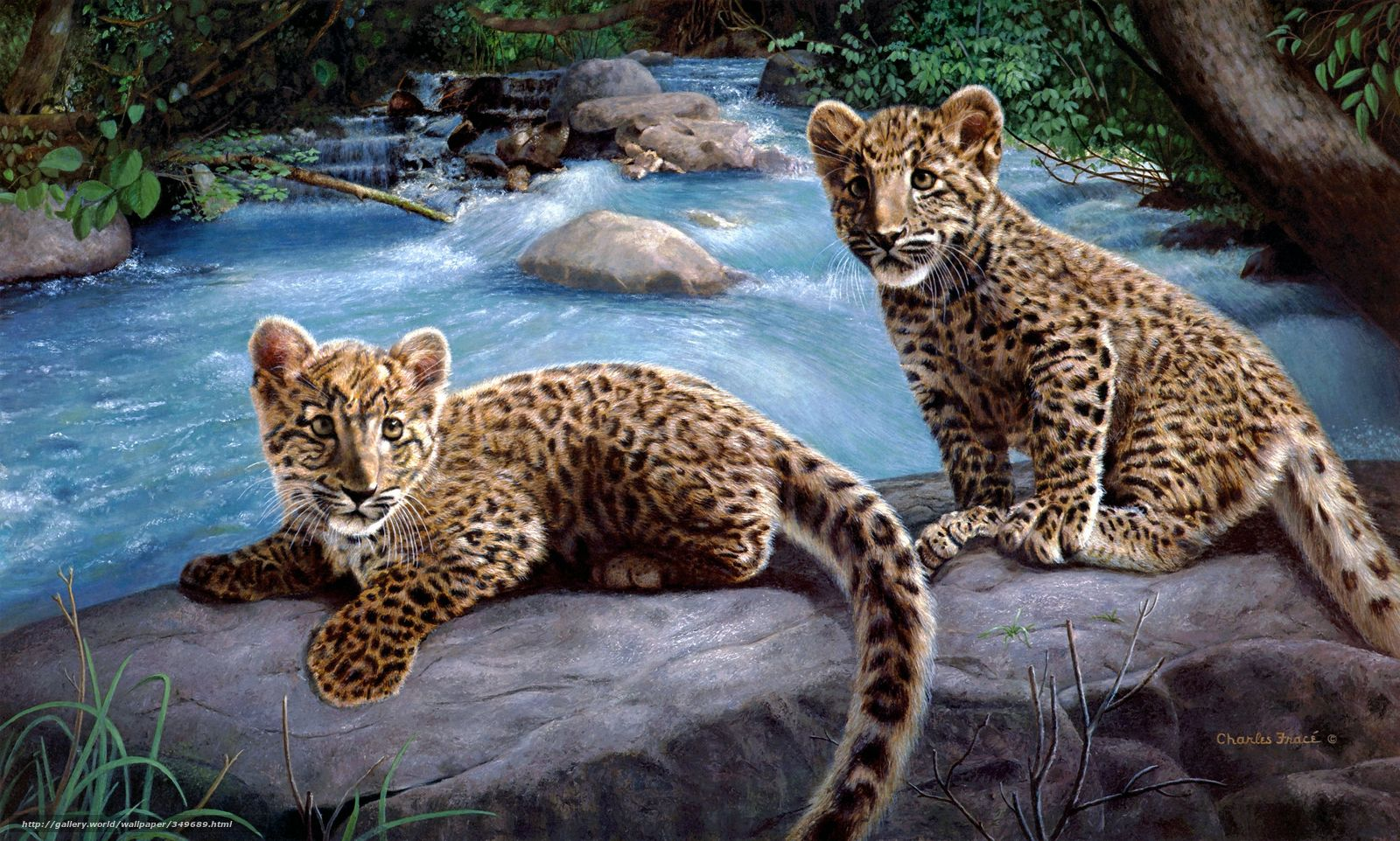 Download wallpaper charles frace,  Leopards,  river,  Art free desktop wallpaper in the resolution 2848x1712 — picture №349689