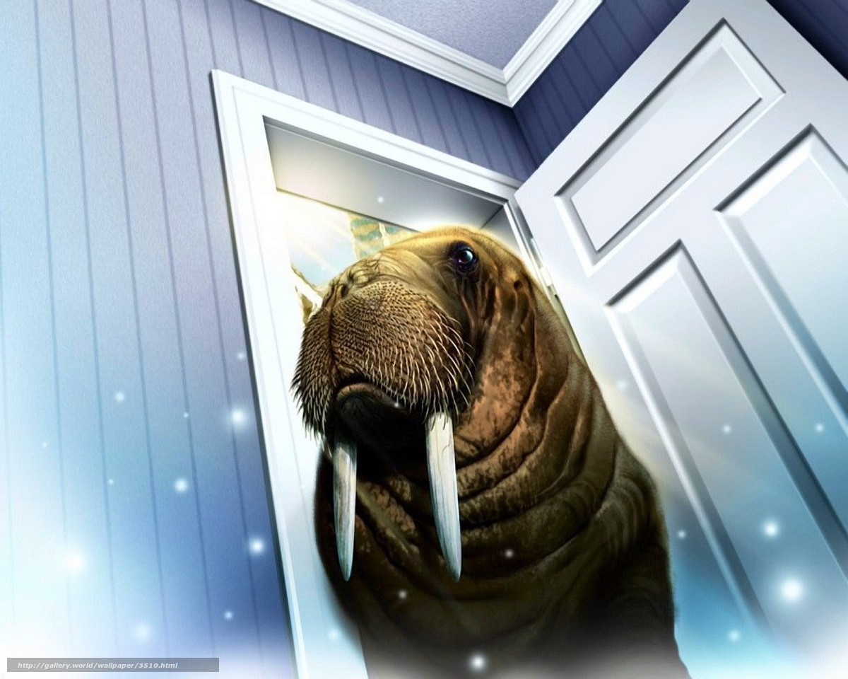 Download wallpaper walrus,  door,  room free desktop wallpaper in the resolution 1280x1024 — picture №3510